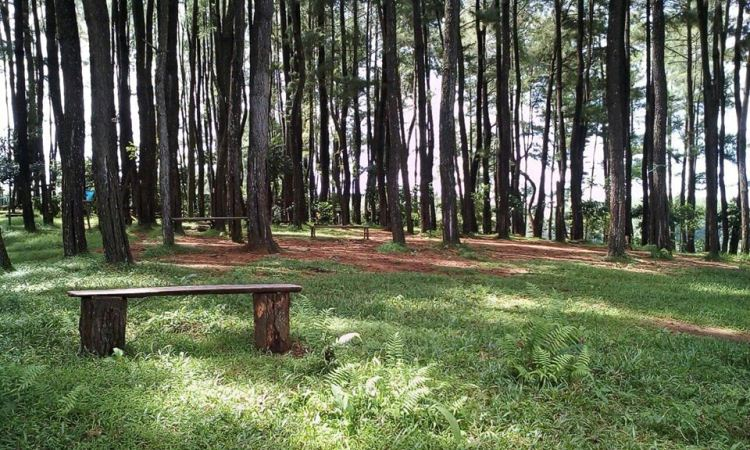 Hutan Pinus Bissoloro