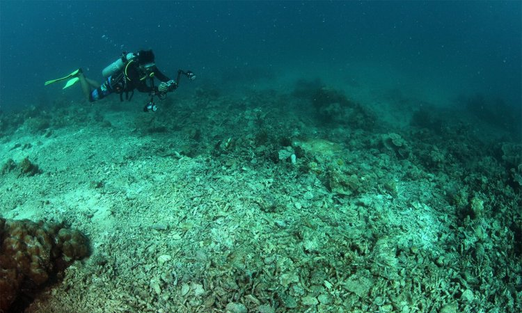 Aktivitas di Pulau Barrang Lompo